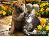 Ветеринария у вас на дому